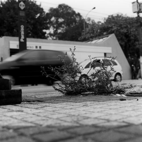 Plantas no Concreto